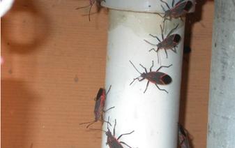 Environmentally Friendly Pest Control Company Beetle